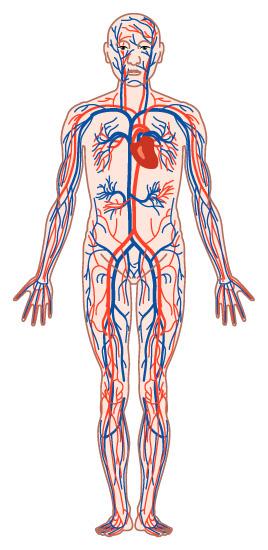 心臓腫瘍には良性と悪性があり、悪性の中には転移性と原発性があります