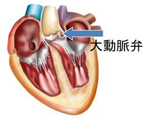 大動脈弁の位置
