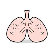 健康な肺です