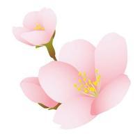 Sakura_b